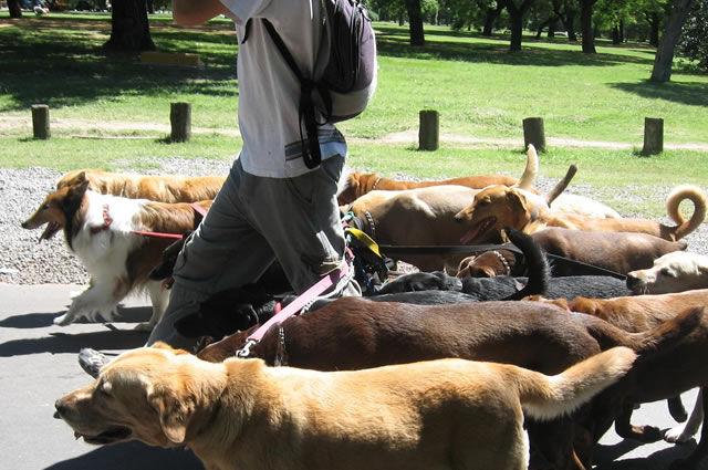 Cuidadores de Animais em Sorocaba